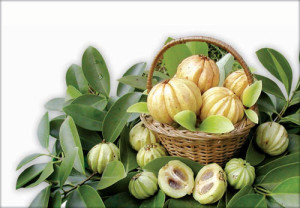garcinia-cambogia-greece