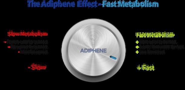Οι μεταβολιστές λίπους του Adiphene